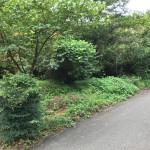 定住向き、緑豊かな環境
