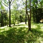 生活便利、緑眩しい土地
